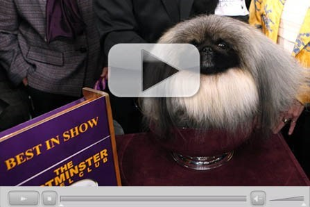 dogs people pets show Westminster Kennel Club Video