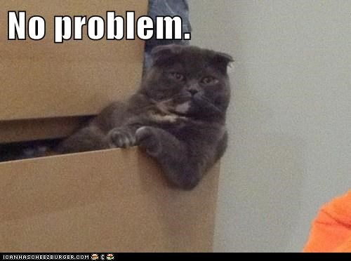 drawer chill Cats - 7058833664