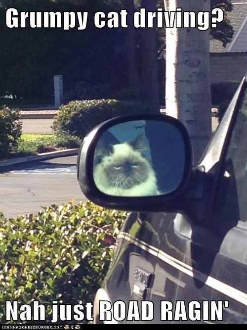 Grumpy cat driving?  Nah just ROAD RAGIN'