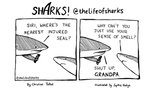 life funny comics animal comics sharks web comics - 7059205