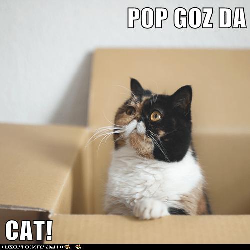P0P GOZ DA  CAT!