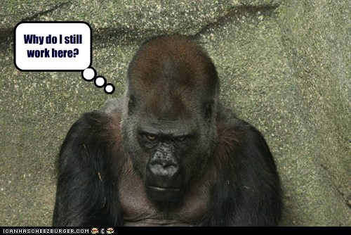 working,gorillas,grumpy,why