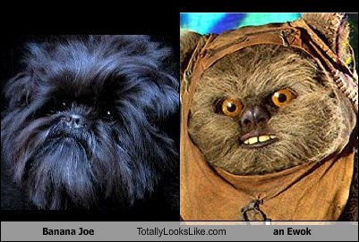 banana joe TLL wicket show dog ewok
