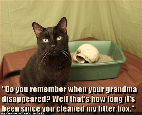 """Do you remember when your grandma disappeared? Well that's how long it's been since you cleaned my litter box."""