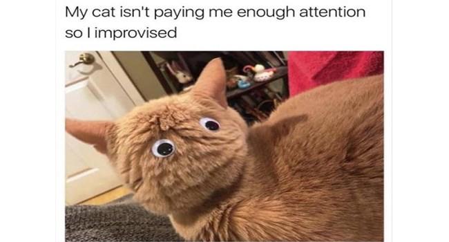 funny memes Memes googly eyes animal memes - 7061253