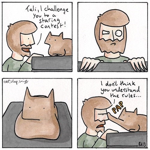 comic,staring contest,Cats