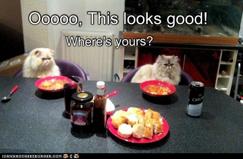 share food Cats funny - 7061517056