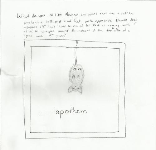 question,geometry,opossum,answer,lead up,apothem,longform,animal