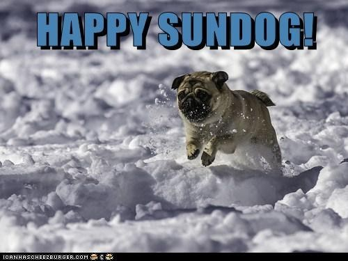 dogs pug snow Sundog - 7061925376