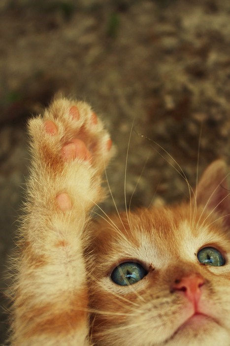 cyoot kitteh of teh day,paw,Cats