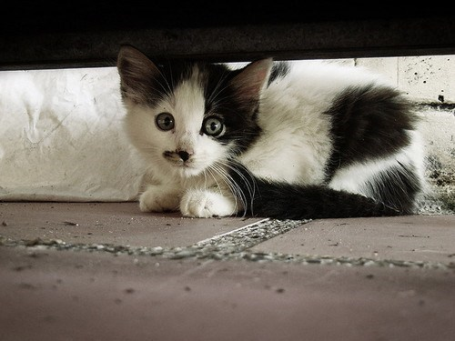 cyoot kitteh of teh day,under,hide,Cats