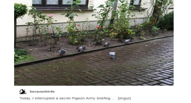 pigeons are such smart birds