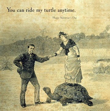 gentleman,turtle,Valentines day
