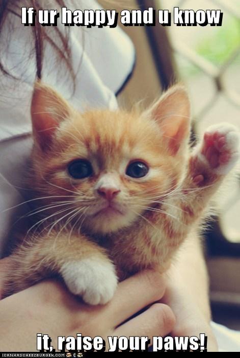 kitten happy Cats - 7062228992
