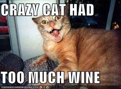 Crazy Cat Had Too Much Wine Cheezburger Funny Memes Funny Pictures