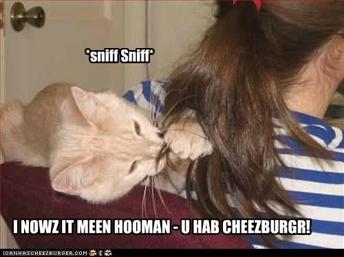 Cheezburger Image 7062568704