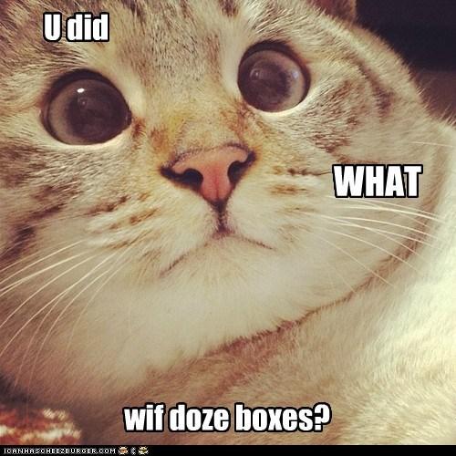 boxes box Cats - 7063186432
