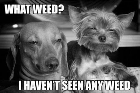 drugs marijuana weed animals after 12 - 7063889920