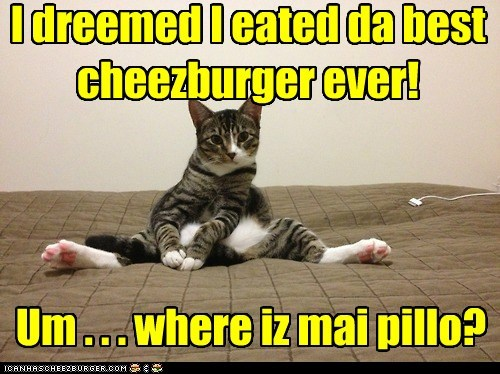 Cheezburger Image 7063933696