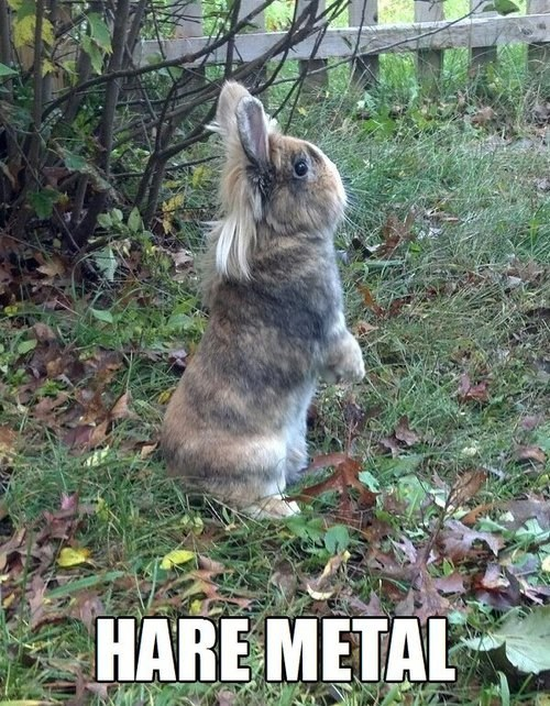 bunnies,puns,vince neil,heavy metal,hares,hair metal