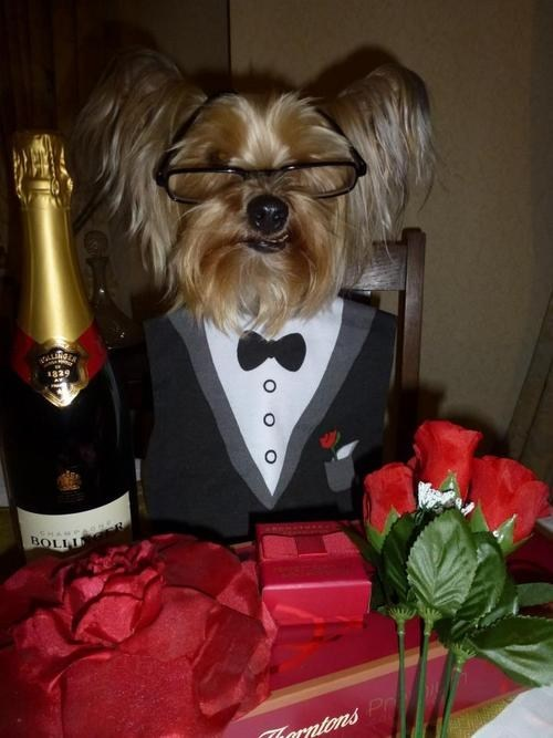 boyfriend dogs Valentines day - 7064182784