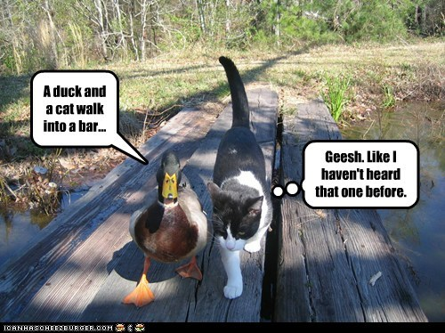 A duck and a cat walk into a bar... Geesh. Like I haven't heard that one before.