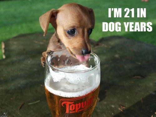 beer alcohol dog years - 7064512512