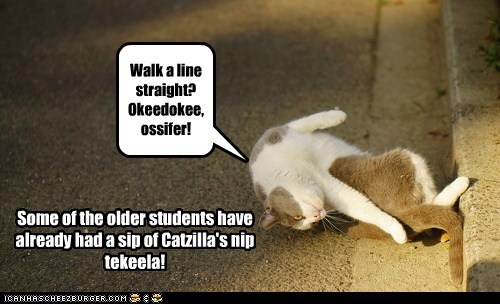 Walk a line straight? Okeedokee, ossifer! Some of the older students have already had a sip of Catzilla's nip tekeela!