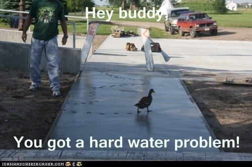 hard water,ducks,tracks,advice,cement