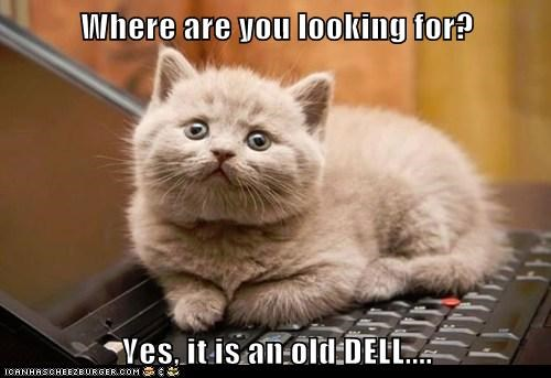 Where are you looking for?  Yes, it is an old DELL....