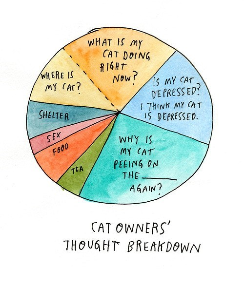 cat owners,Cats,Pie Chart