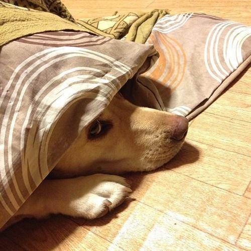 dogs list labrador aspca - 7066859264