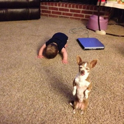 standing Babies dogs - 7066885376