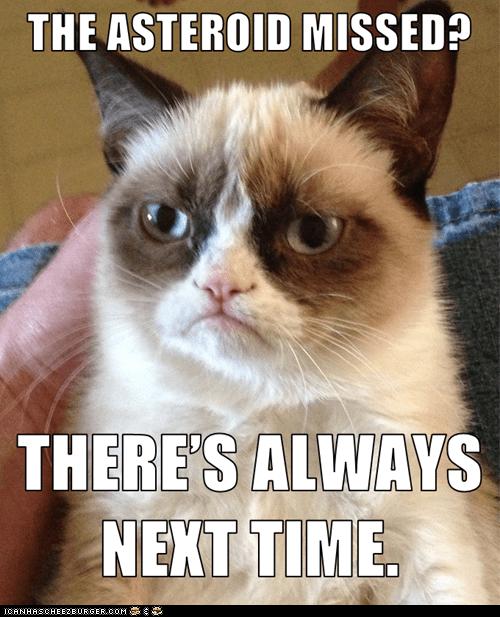 tardar sauce Grumpy Cat Cats - 7067021056