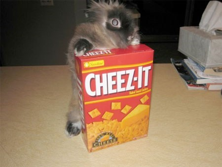 Bunday bunnies cheez-it noms squee rabbits - 7067092480
