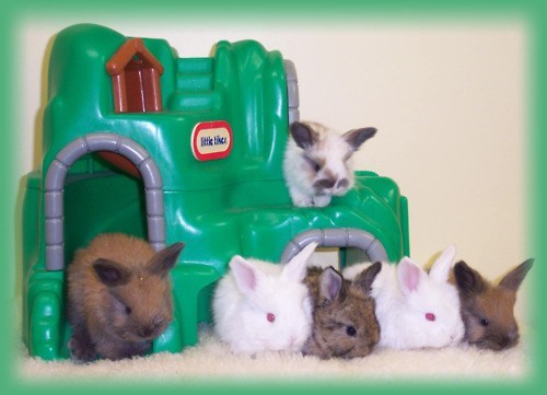 Bunday,kindergarten,bunnies,school photo,squee,rabbits