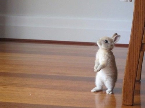 Bunday,bunnies,squee,adventures,rabbits
