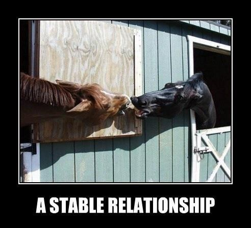 relationship puns kissing love horses stable