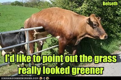 fence stuck cows grass is always greener - 7067527168