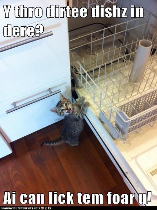 kitten kitty food Cats - 7067899136