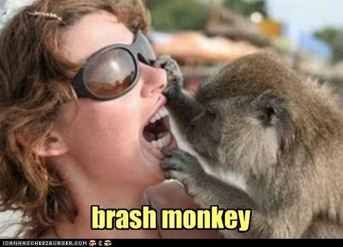 brash monkey