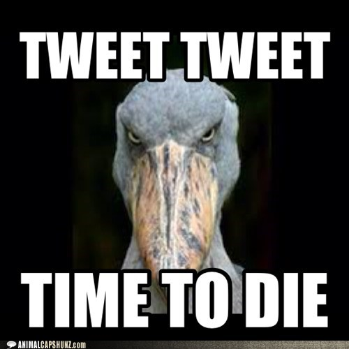 actually angry bird time to die tweet - 7068710656