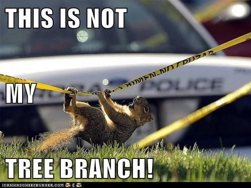 crime scene,police tape,squirrels,confused,tree branch