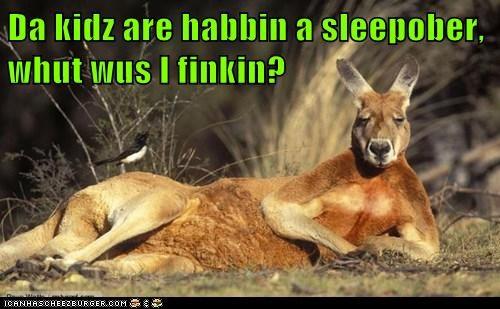 kids tired sleepover kangaroos - 7069424896