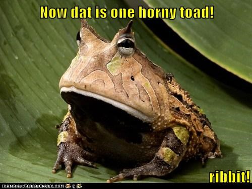 Now dat is one horny toad! ribbit!