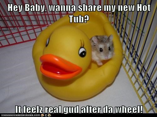 wheel hot tub pick-up lines hamsters rubber duck - 7069504000