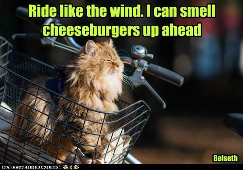 Cheezburger Image 7069730816