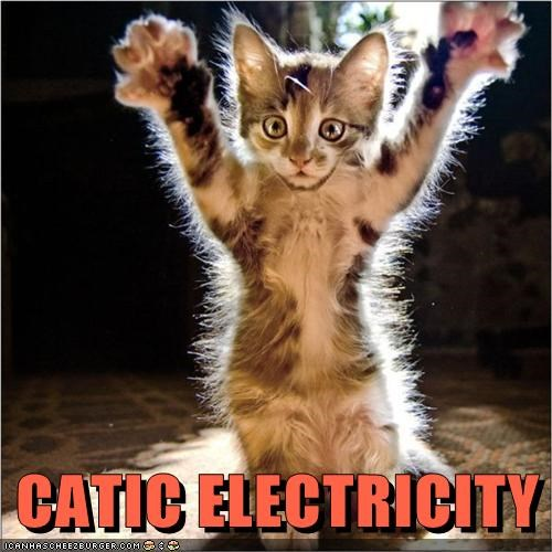 kitten electricity kitty Cats - 7070070528