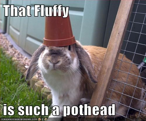 bunnies head wearing pot puns