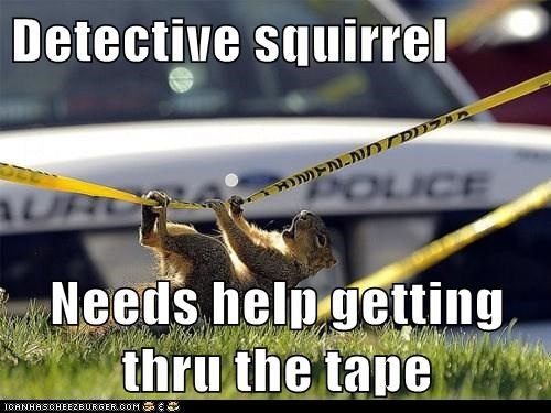 crime scene,police tape,detective,stuck,squirrels